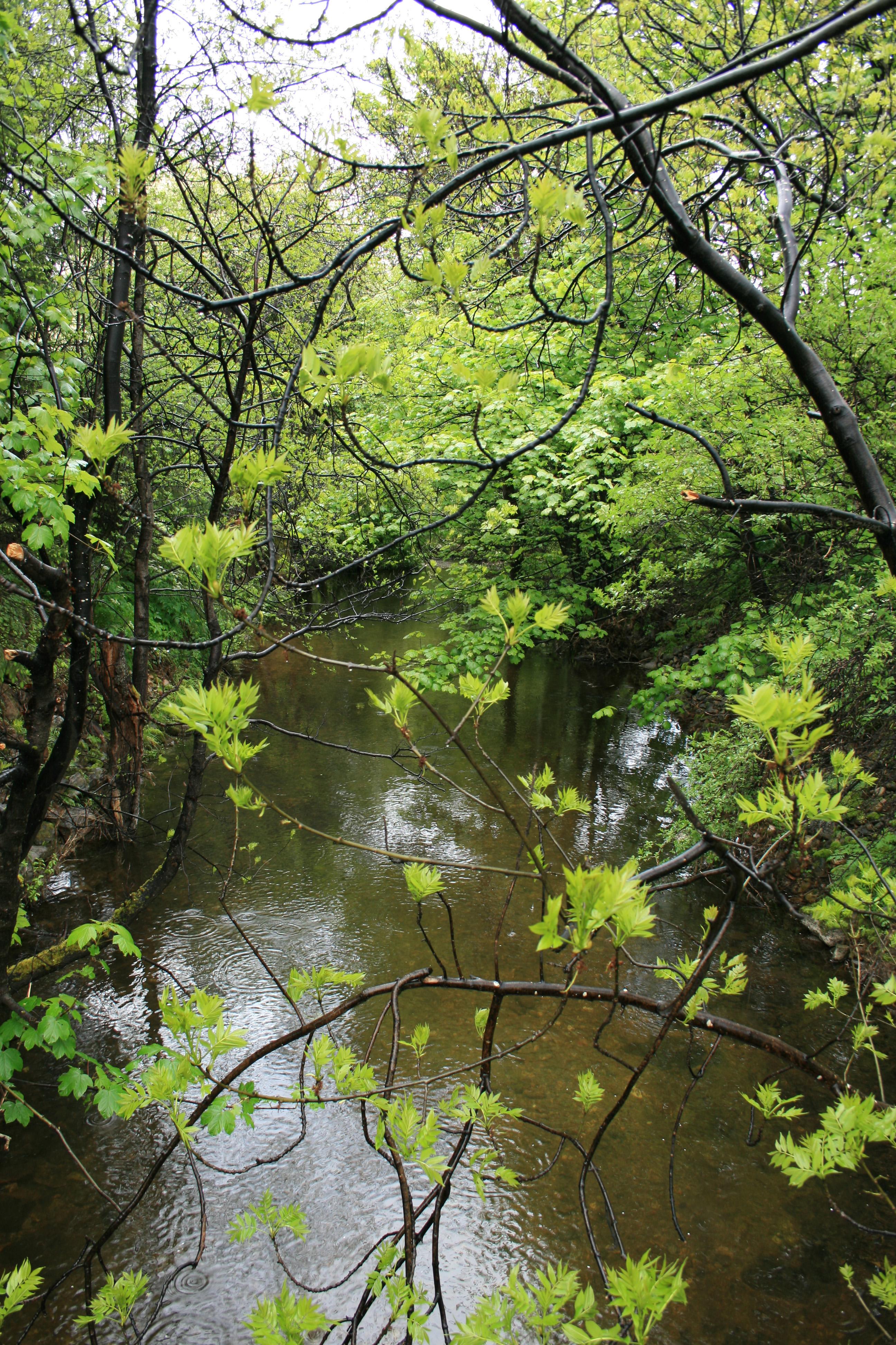 River Dullan v2